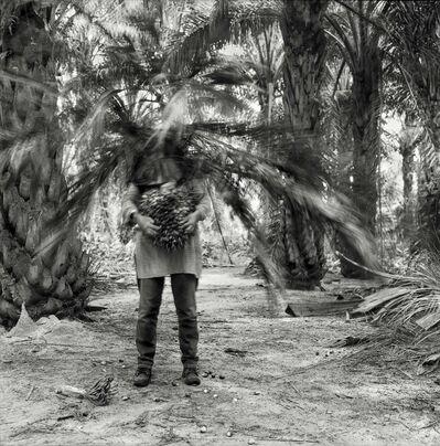 Simryn Gill, 'Vegetation', 2016