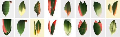Andrea Wolf, 'Leaf Study', 2020