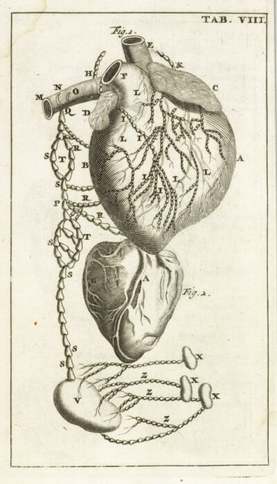 Steven Blankaart, 'Tab. VIII', 1695
