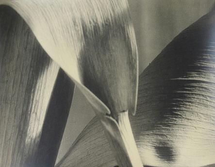 John Vanderpant, 'Untitled (detail of leaves)', ca. 1930