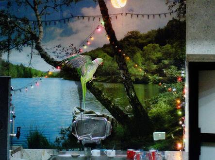 Maha Maamoun, 'Untitled (Parrot)', 2015