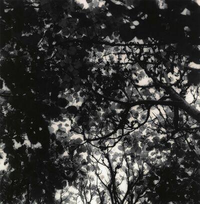 Ken Rosenthal, 'Autumn', 2010