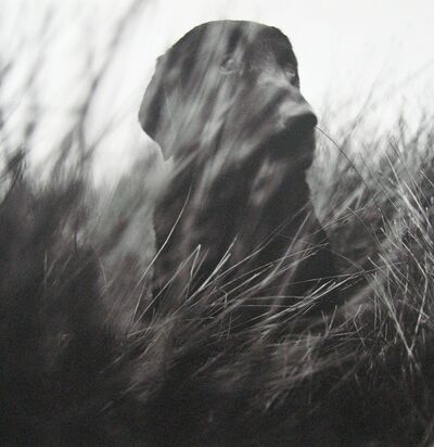 Keith Carter, 'Marsh', 1995