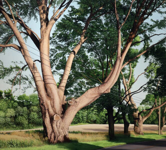Anita Mazzucca, 'Trimmed Trees', 2009