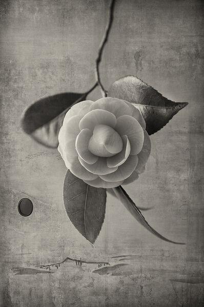 Kenji Wakasugi, 'Camellia', 2016