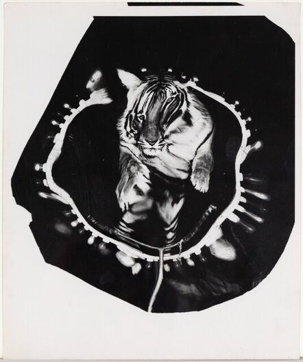 Weegee, 'Jumping Tiger (Triptych)', 1950