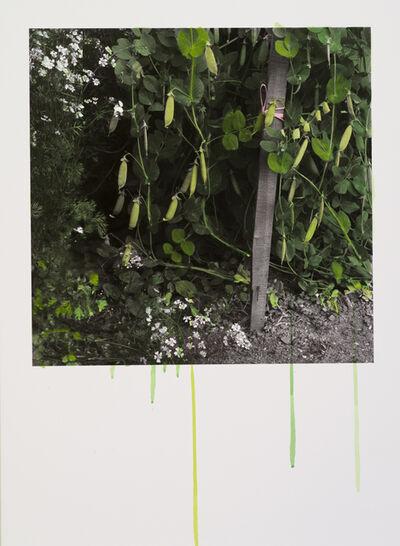 Honggoo Kang, 'Study of Green-Green Pea', 2012