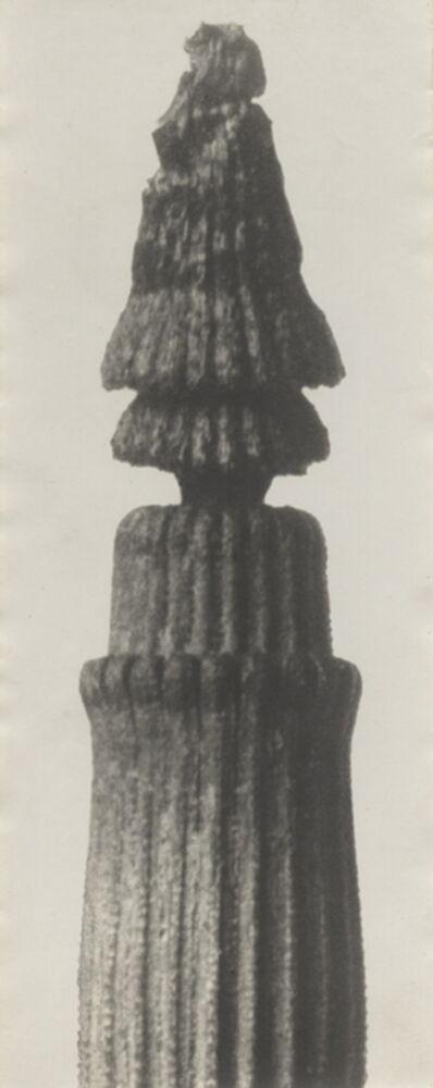 Karl Blossfeldt, 'Rough Horsetail, 25fold enlargement', ca. 1920