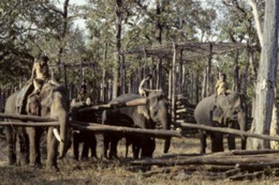 John Isaac, 'Coorg, India', 1978