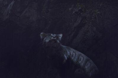 Robert Zhao Renhui, ' Spayed Feral Cat in its Natural Habitat', 2012