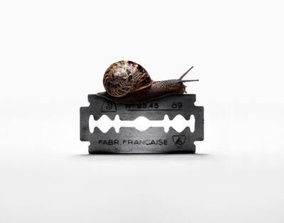 Nancy Fouts, 'Snail on Razorblade', 2010