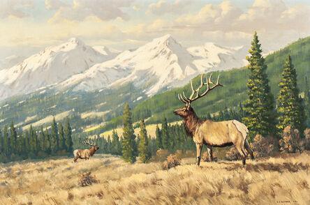Robert S. Sleicher, 'Alberta Elk'