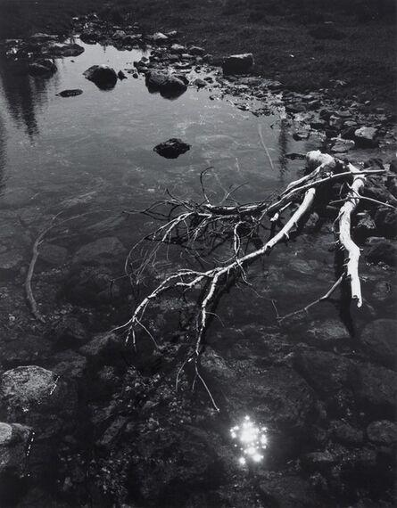 Ansel Adams, 'Branch and Creek', 1947