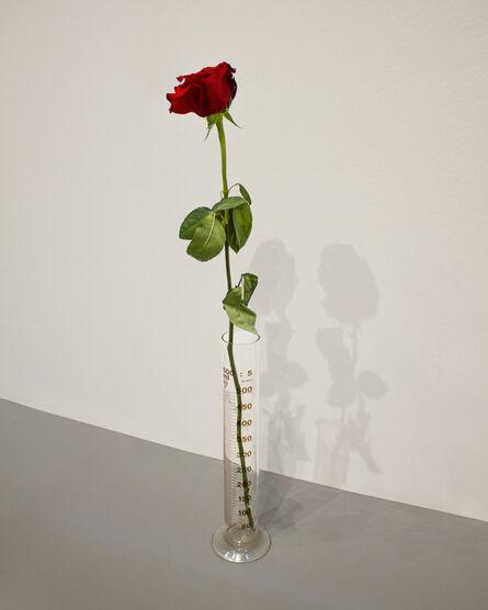 Joseph Beuys, 'Eine Rose fur direkte Demokratie', 1968