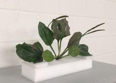 Tony Matelli, 'Weed', 2007