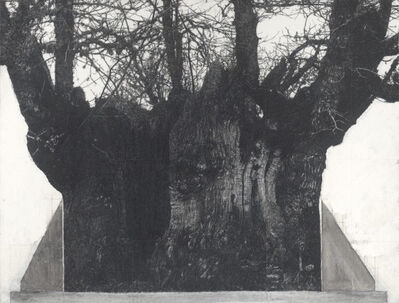 Patrick Van Caeckenbergh, 'Drawing of old trees on wintry days during 2007-2014', 2007-2014