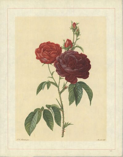 Pierre Joseph Redouté, 'Rosa Gallica (Purpuroviolacea Magna); Rosier Evêque (syn)', 1938