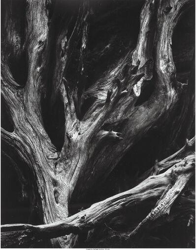 Ansel Adams, 'Sequoia Roots, Yosemite National Park, California', 1950