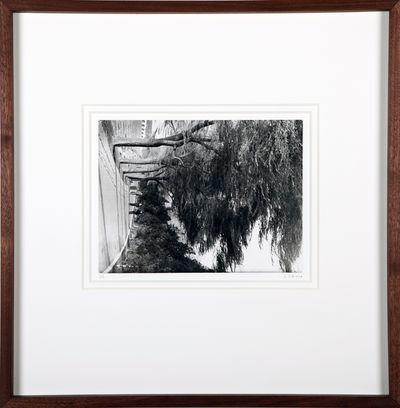 Cai Dongdong, 'Weeping Willow', 2015