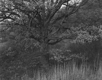George Tice, 'Oak Tree, Holmdel, NJ', 1970