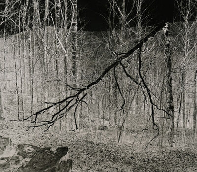 Shi Guorui 史国瑞, 'Trees, Catskill Mountains, New York March 9 2019', 2019