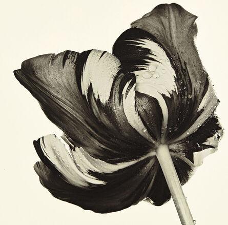 Irving Penn, 'Cottage Tulip: Sorbet, New York', 1967