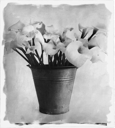 Stephen Inggs, 'Aurum Lilies', 2009