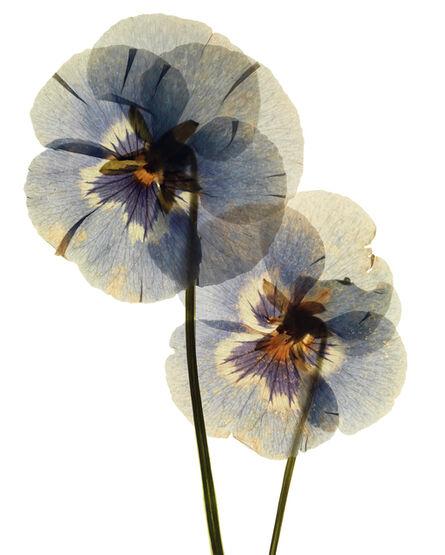 Edmund Clark, 'My Shadow's Reflection - Plant 16', 2017