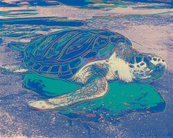 Andy Warhol, 'Turtle', 1985