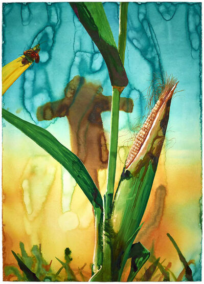 Alexis Rockman, 'Untitled (Corn)', 2013
