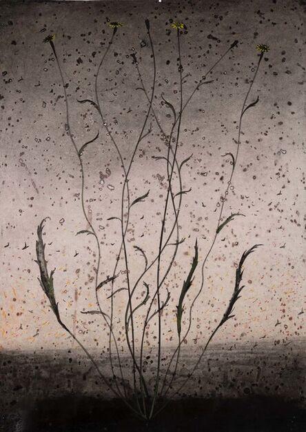 Michael Canning, 'Dust Secrets I', 2018-2019