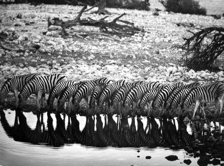 Sebastião Salgado, 'Mountain Zebra [they are confined to hilly country]', 2005