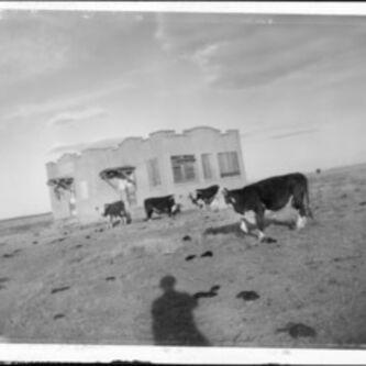Donald Woodman, 'Home on the Range', 1980s