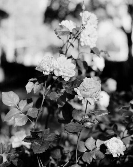 Zora J. Murff, 'Roses', ca. 2019