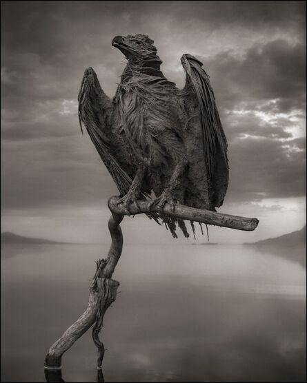 Nick Brandt, 'Calcified Fish Eagle, Lake Natron, 2012', 2012