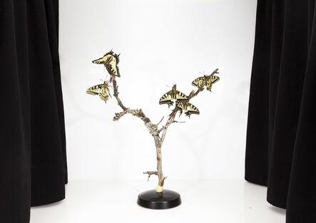 Sanna Kannisto, 'Papilio Machaon', 2016