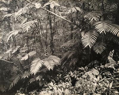 Armando Salas Portugal, 'Rainforest, Mexico', ca. 1960