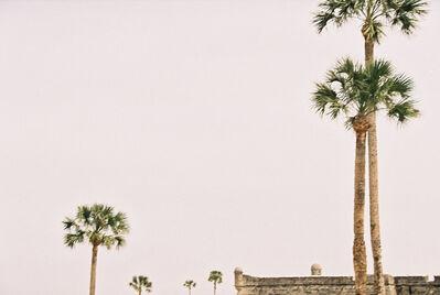 Lorena Lohr, 'Untitled (St Augustine palms)', 2010