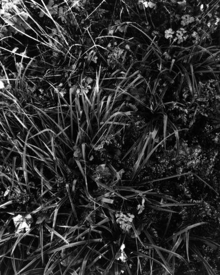 Carola Vogt und Peter Boerboom, 'Gartenstück Nr. 2, Seeshaupt', 2016
