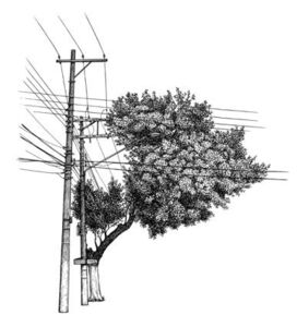 Daniel Caballero, 'Árvore nº 7'