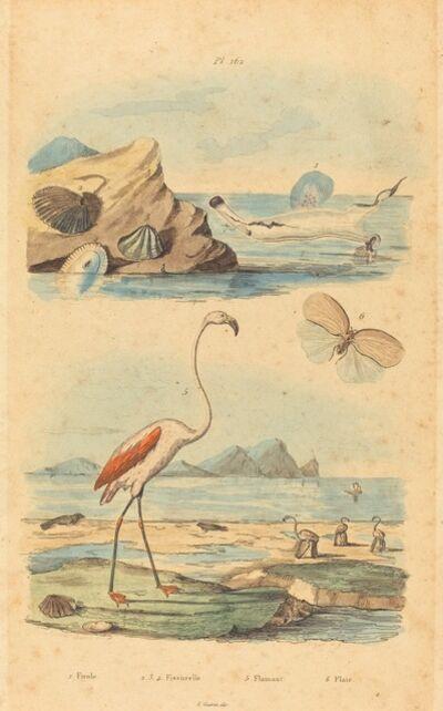 Joh. Baptist Pfitzer after Acavie Baron, 'Flamingos and Shells', published 1833/1839