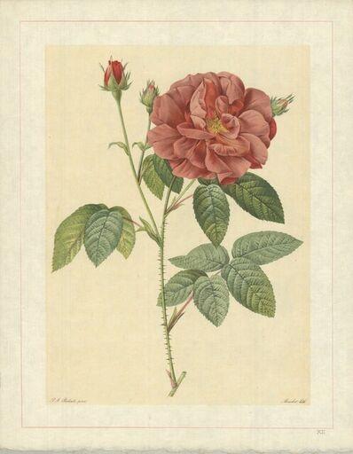 Pierre Joseph Redouté, 'Rosa Gallica Officinalis; Rosier des Apothicaires', 1938