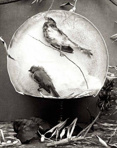 Zoë Zimmerman, 'Autumn Birds', 2006