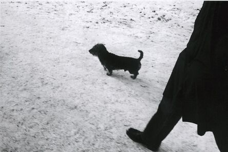 Walter Schels, 'Dog #8', 1979