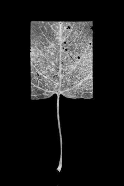 Henrik Strömberg, 'Leaf Cut 05'