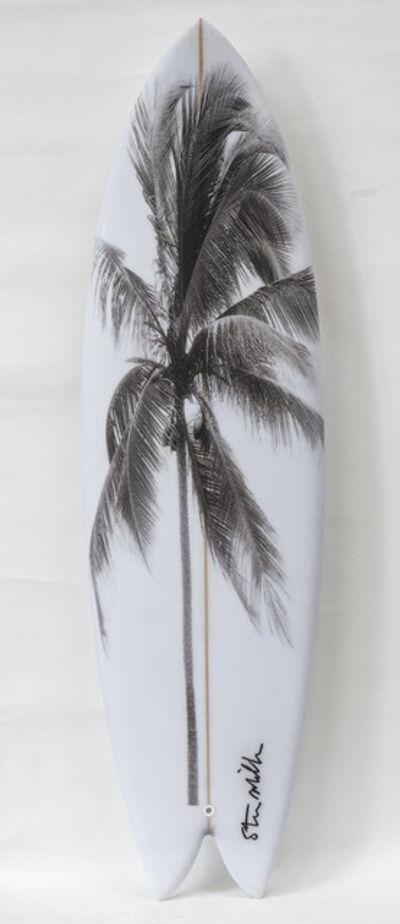 Steve Miller, ' Black Palm on White Board', 2019