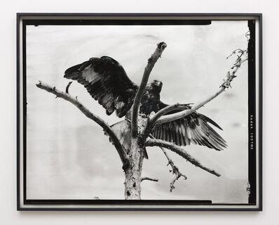 Gerard Byrne (b. 1969), 'Eighth beast', 2018