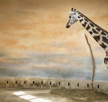 Eric Pillot, 'Giraffe and Light', 2012