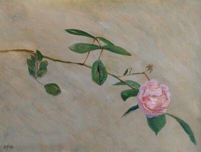 William Packer, 'Clapham Rose', 1984