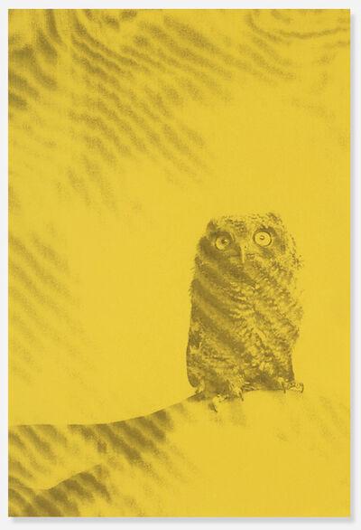 Ryan McGinley, 'Owl poster', 2011